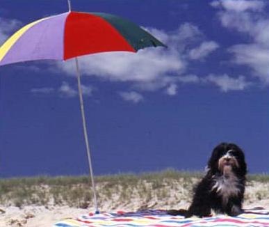 Rosie at the beach