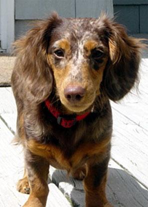 Harrry puppy